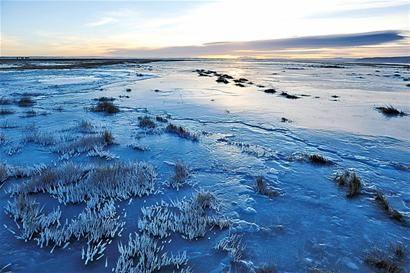 千余只大天鹅陆续集结于青海湖栖息越冬