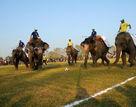 尼泊尔举办大象节