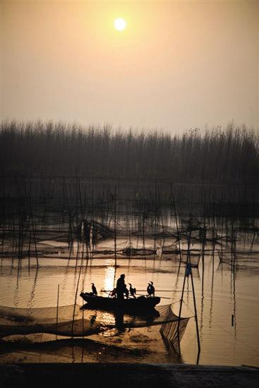 在网箱养鱼、地笼捕鱼已占据主流的微山湖里,张大爷仍然坚持划着舢板船用鱼鹰捕鱼。夕阳下荡开的波纹和剪影,像是来自微山湖遥远的回声。