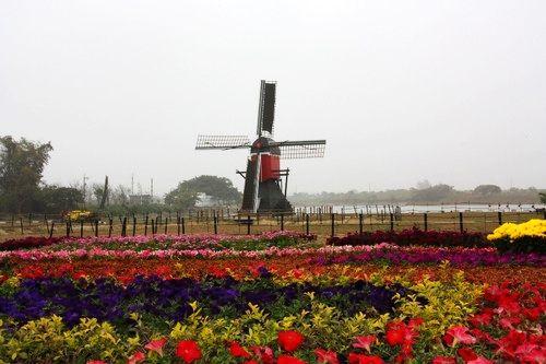 原汁原味的荷兰风车,加上水绿田园景致,彷彿来到荷兰