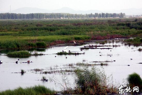 千鸟湖湿地风光