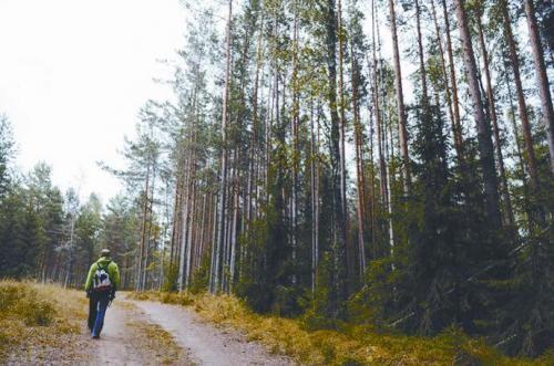 爱沙尼亚森林