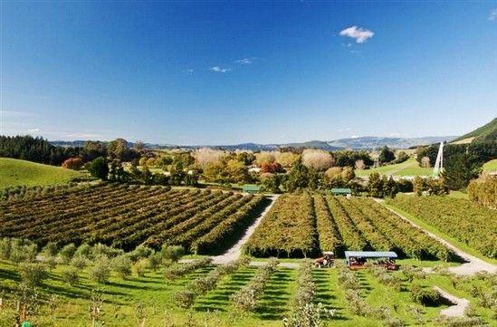 新西兰休闲寄宿 自己动手体验西方农场生活