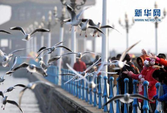1月28日,游客在青岛栈桥景区观赏、喂食海鸥。新华社记者李紫恒摄