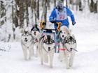 俄罗斯国际狗拉雪橇比赛各路萌犬齐亮相