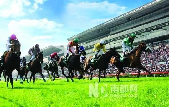 春节可以去感受香港的赛马文化。