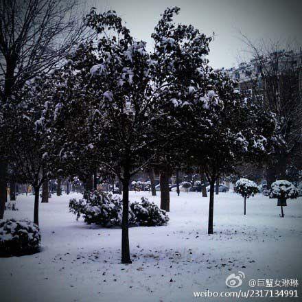 雪后淄博银装素裹(图片来源:新浪微博)
