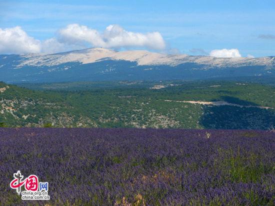 紫色世界的田园风光