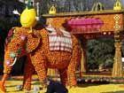 法国芒通柠檬节即将开幕水果雕塑惟妙惟肖