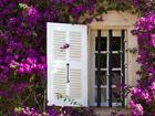 打开窗户迎接春天看国外美丽的花窗