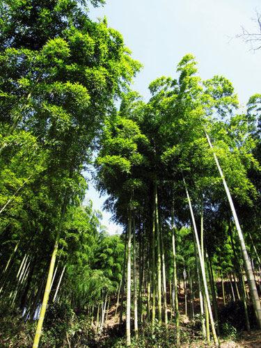 新浪旅游配图:竹林 摄影:小白
