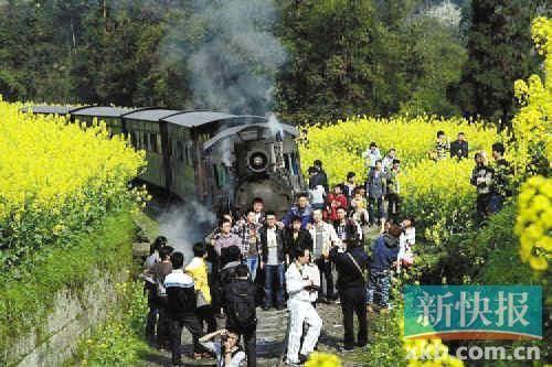 小火车开过油菜花地