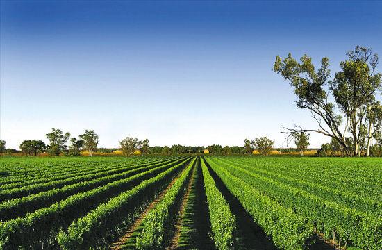 南澳洲的葡萄栽培地