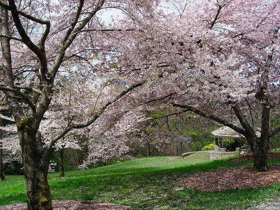 西雅图华盛顿植物园
