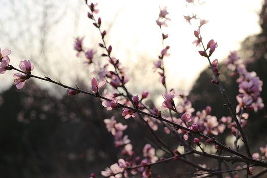 梁山风景区桃花盛开