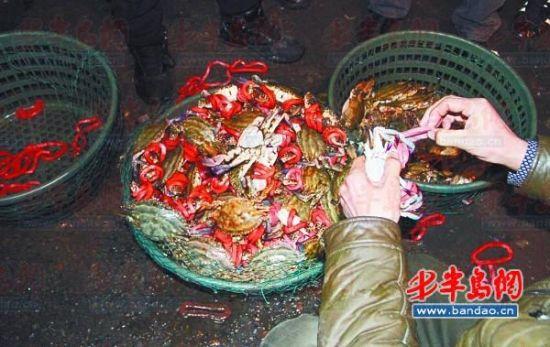 南山市场商贩正在忙着给螃蟹换上大皮筋。