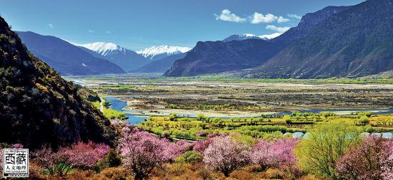 盛开在峡谷中的桃花