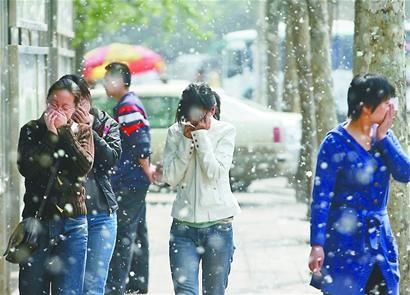 每到春天,马鞍山路上都会飘扬着杨絮,过往行人纷纷掩面而行。