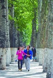 每到夏天,马鞍山路两旁的毛白杨为路人遮挡阳光。