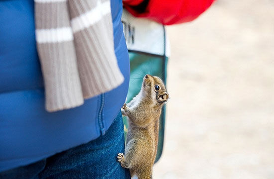 这样大胆地松鼠可不多见
