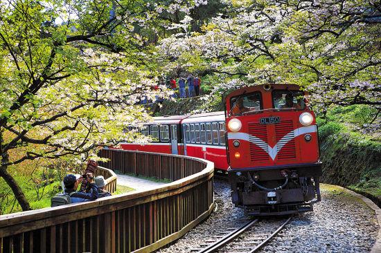 赏樱小火车