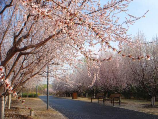春花节亮相京城 免费向市民开放