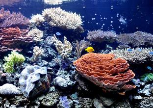 美丽的珊瑚