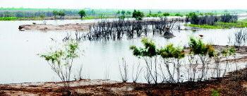 """▲黄河口生态旅游区独特的湿地生态系统是东北亚内陆河环西太平洋鸟类迁徙的重要""""中转站""""和越冬、栖息、繁殖地。"""