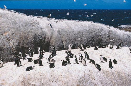 这里不仅是海豹的家园,更是它们的游乐场。