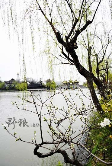 新浪旅游配图:瘦西湖 摄影:野狼