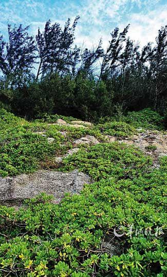 岛上背风处植被丰盛