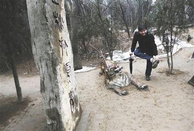 严冬中的景阳冈,依旧有游客前来,在这只石虎前逗留。