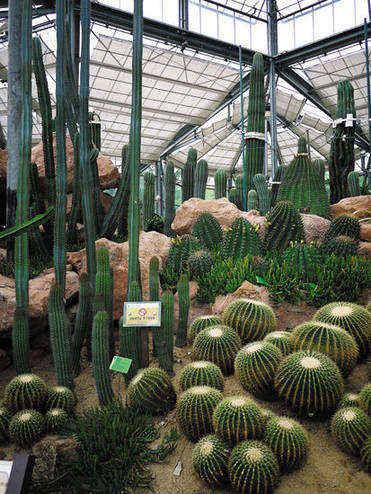 广州市天河区龙洞的中国科学院华南植物园 刘星彤 摄