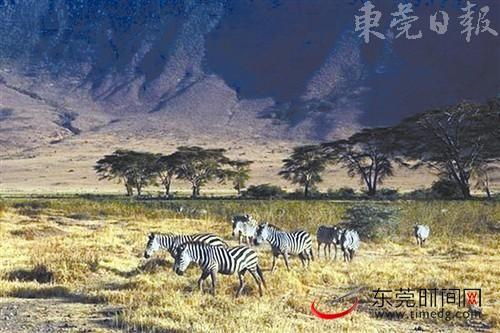 坦桑尼亚野生动物