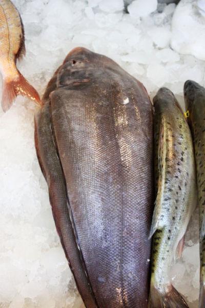 大条的冰鲜比目鱼,在天津上学的时候在姑姑家吃过这个,肉质细嫩,特别的鲜美