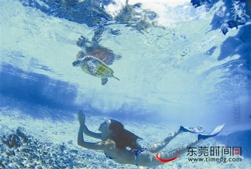 蔚蓝的海底