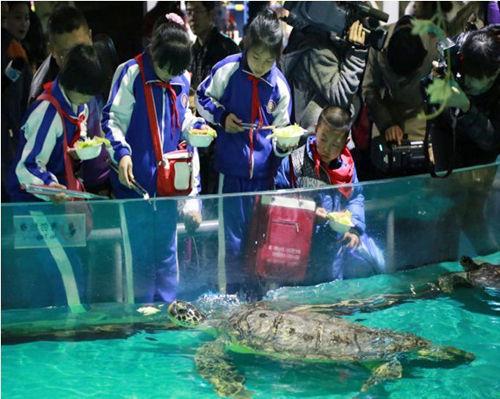 参赛冠军体验喂海龟。