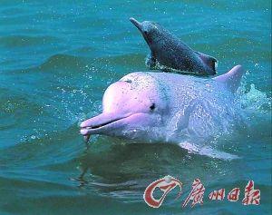 在钦州三娘湾可由快艇入海和海豚嬉戏。(资料图片)