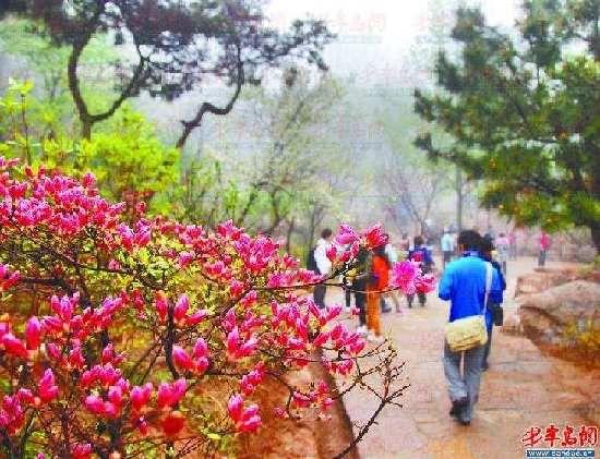 黄岛映山红到赏花期五一可游青岛盛放逛庙最坑爹的游戏攻略6图片