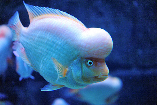 可爱的海洋生物