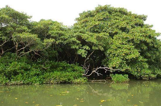 新浪旅游配图:东寨港红树林 摄影:杏影笛音