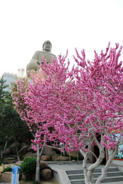 5月12日 威海赤山樱花盛开