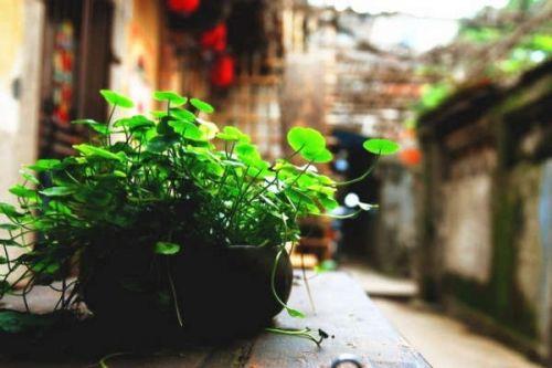 盆栽也文艺