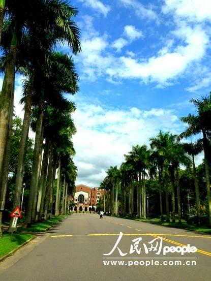 台湾大学的椰林大道(摄影:厉姣)