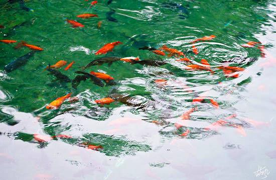 趵突泉池里的水清澈见底