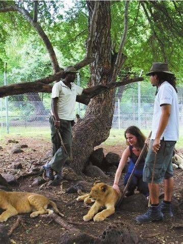 与狮子亲密接触