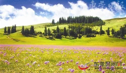 草原上盛开的野花