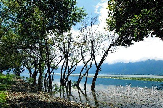 从双廊到大理古城的路上,是一片湿地
