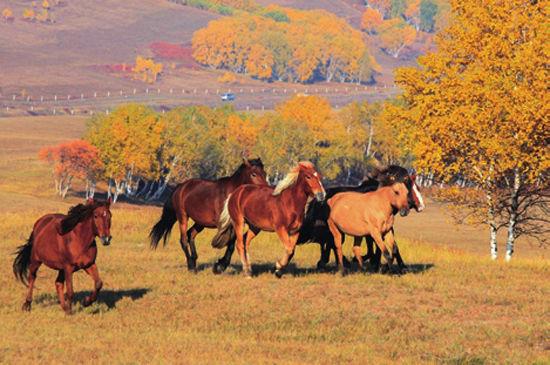 马群展现了北方粗犷雄浑的阳刚。
