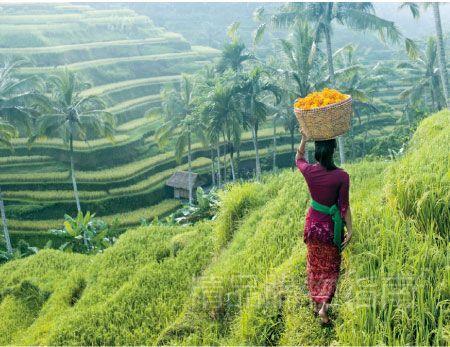 巴厘岛的田园风情是其他岛屿所不具有的。